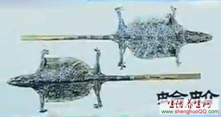 蛤蚧www.yangshengpu.com
