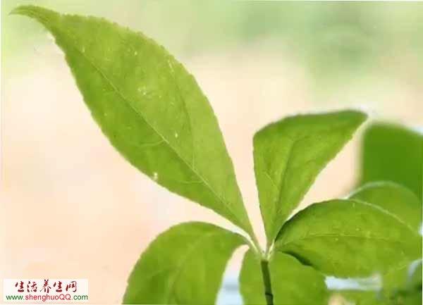 绿色中医名片背景素材