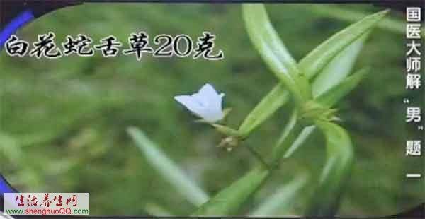 中药-白花蛇舌草