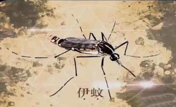 登革热花蚊子图片_伊蚊-白纹伊蚊-伊蚊属及各地分布-花蚊子幼虫_养生铺