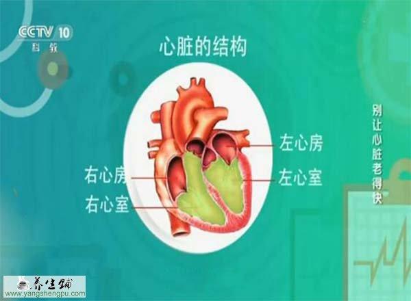 心脏的结构和功能图