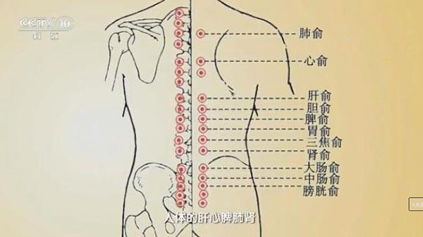 反捶背脊式