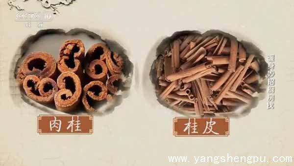 桂皮的肉桂的区别www.yangshengpu.com