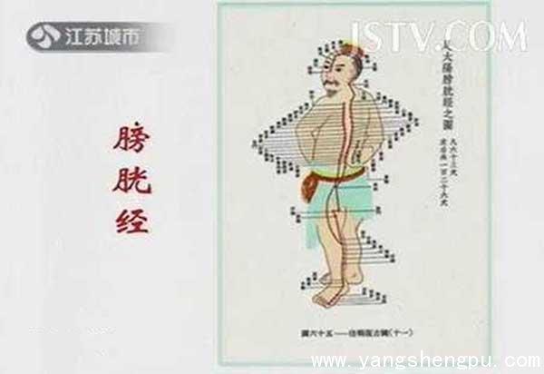 膀胱经循行图
