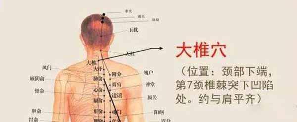 大椎穴位位置图www.yangshengpu.com