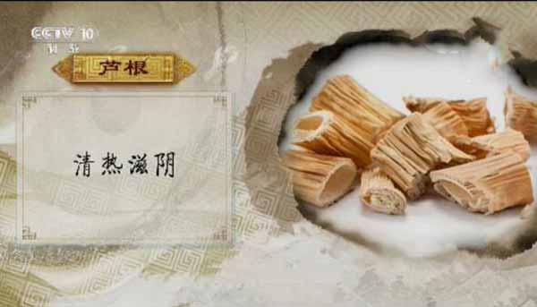 芦根的作用www.yangshengpu.com