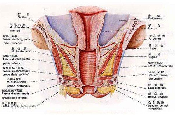 位置 生理中 子宮口